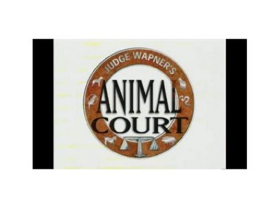 animalcourt-776216.jpg
